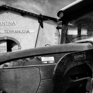 Vendemmia Bianco TerranuovaBracciolini2018-13