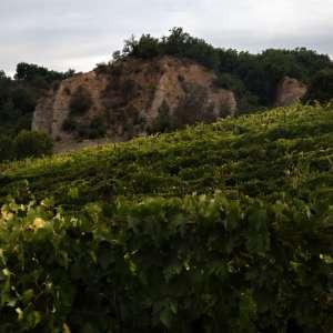 Vin Santo TerranuovaBracciolini2018-20